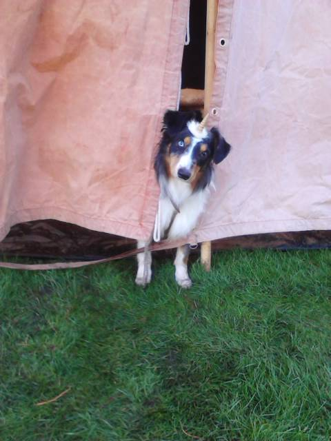 unicorn dog looking out of a tent